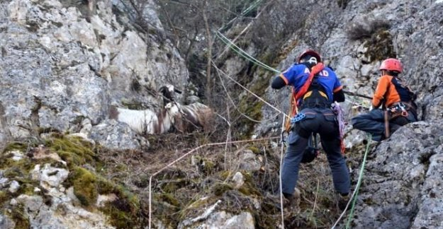 Mahsur kalan keçiler 4 gün sonra kurtarıldı