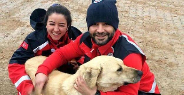 UMKE ekibi, şarapnel parçası ile yaralanan köpeği tedavi etti