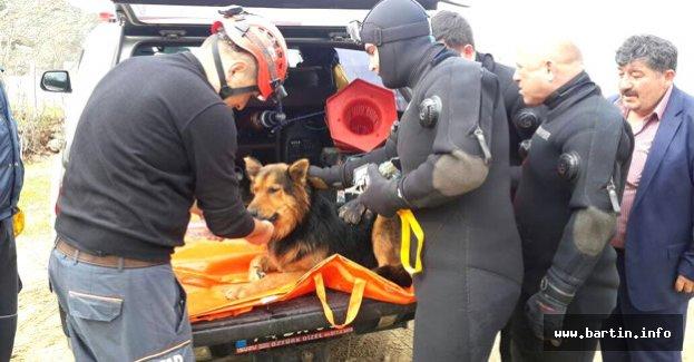 Uçurumdan Düşen Köpeğe Kurtarma Operasyonu