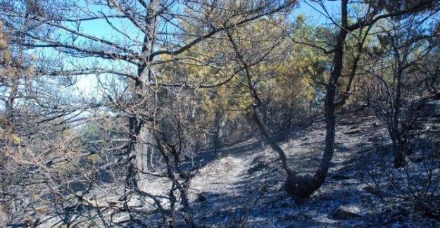 10 hektar orman alanı yandı