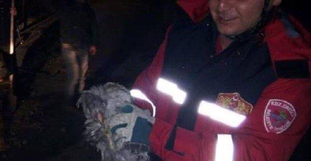 Su isale hattında mahsur kalan tavuk kurtarıldı