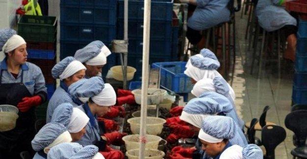 Avrupa'ya yılda 1500 ton salyangoz ihracı
