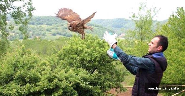 Mahsur kalan baykuş kurtarıldı