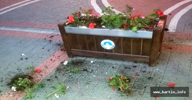 Bu çiçeklerin kime zararı dokundu acaba ?