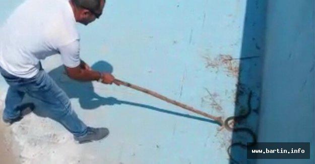 Havuzda mahsur kalan yılan kurtarıldı