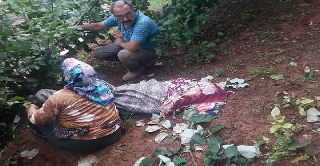 Ihlamur Ağacından Düşen Kadın Öldü