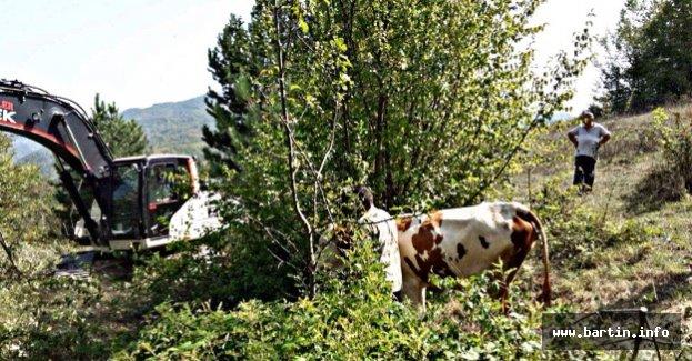 Mahsur kalan inek 3 gün sonra kurtarıldı
