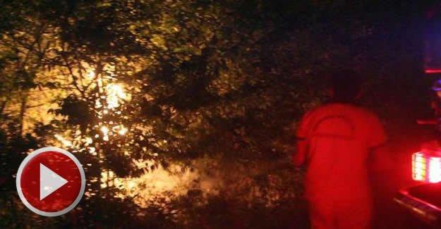 Sigara İzmariti 80 Hektar Ormanı Kül Etti