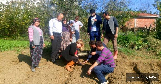 Bartın'da 3 Köyde 2.2 Dekar Araziye Salep Dikildi