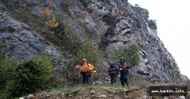 Kayalılarda Mahsur Kalan Bediş Kurtarıldı