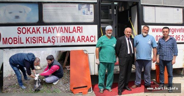 Kozcağız'da Sokak Köpeklerine Özel Bakım