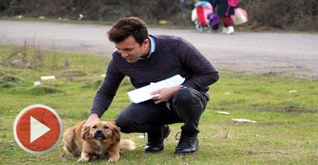 Dedektif gibi iz süren öğretmen, köpek katliamını ortaya çıkardı