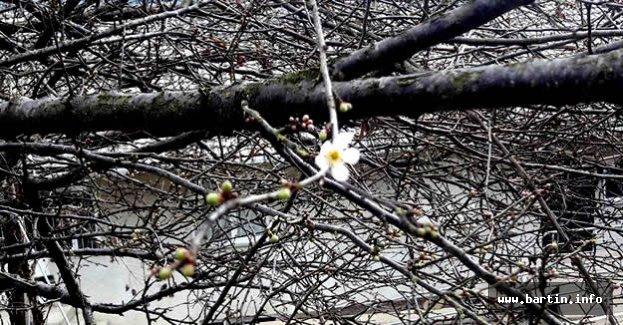 Ağaçlar Çiçek Açtı