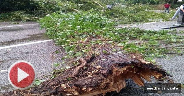Şiddetli Rüzgar Ağaçları Devirdi: 1 Yaralı
