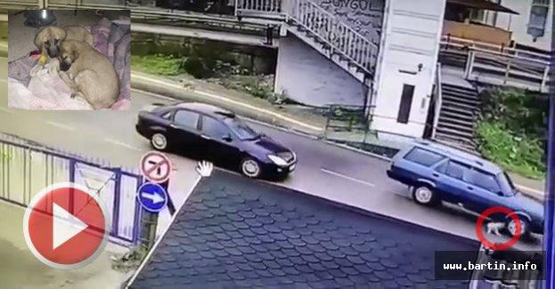 Yavru Köpeğe Çarpıp Kaçan Sürücü Yakalandı