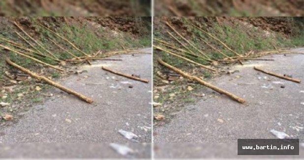 40 Şimşir Ağacı Kesen 2 Kişi Gözaltına Alındı