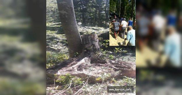 Devrilen Ağacın Altında Kalarak Öldü