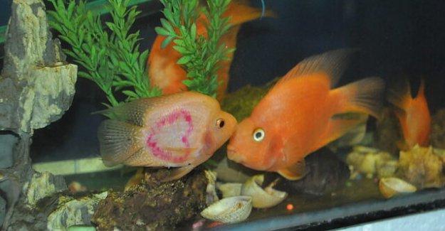 Kalpli Balık İlgi Odağı Oldu