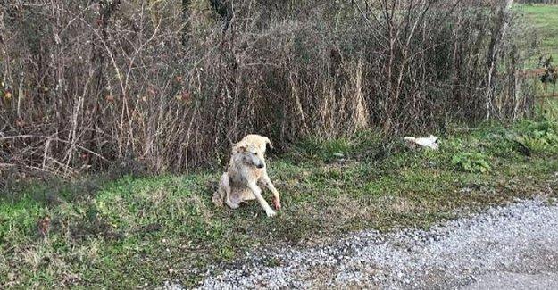 Jandarma'dan Yaralı Köpeğe Şefkat Eli