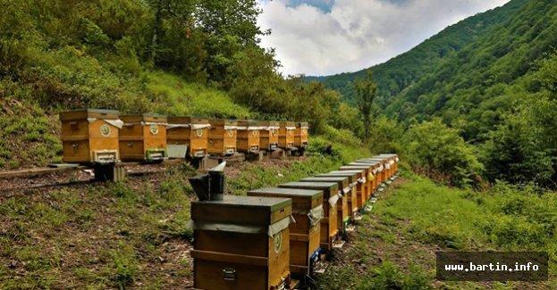Bartın'da Bal Ormanı Tesisi Kurulacak