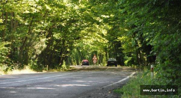 Ağaç Tünelinde Görsel Şölen