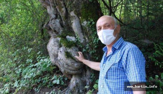 Ağaçtaki El Figürü İlgi Çekiyor