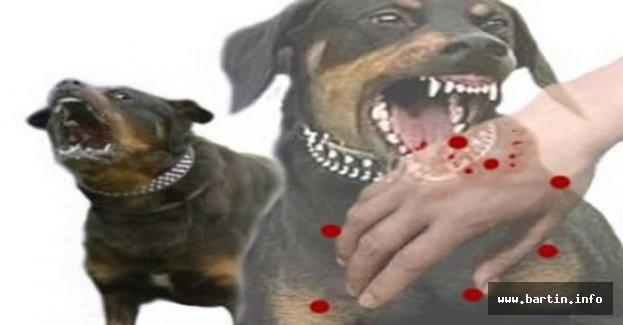 İnkumu'nda Köpek Dehşeti