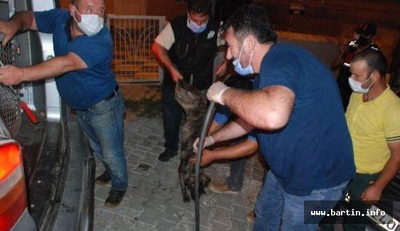 Köpekleri Ölüme Terk Eden Kurum Tespit Edildi