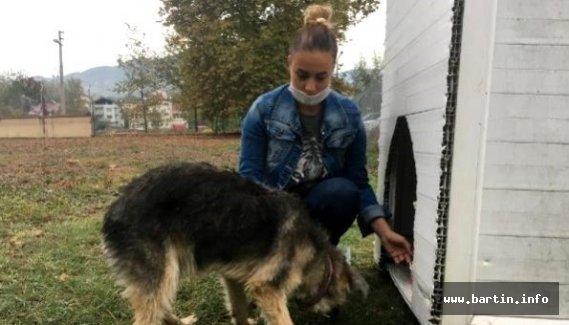 Köpeği döven kişiden şikayetçi oldular