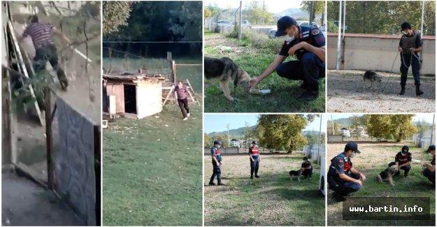 Sopayla Dövülen Boncuk'a Jandarma Şefkati