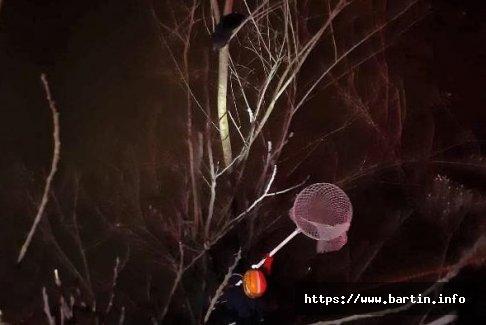 Ağaçta Mahsur Kalan Kedi İçin Seferber Oldular