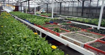 Bartın Belediyesi 20 bin çiçek fidesi ile ilkbahara hazır