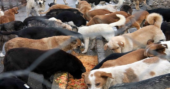 Belediye sahipsiz hayvanlara sahip çıkıyor
