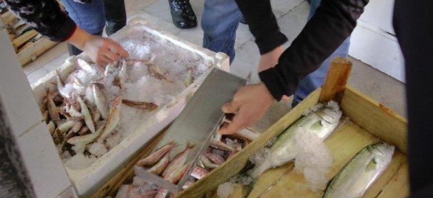 Düzce'de 75 Kilo Balığa El Konuldu