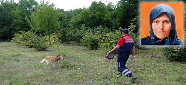 Findık bahçesinde kaybolan yaşlı kadın aranıyor