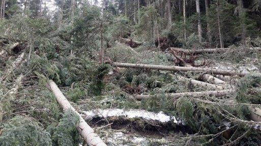 Fırtınanın Ormanlık Alana Zararı Büyük Oldu