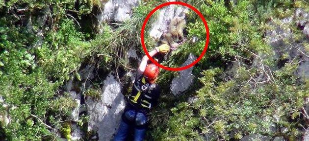 Kayalıklarda Mahsur Kalan Köpeği AFAD Kurtardı