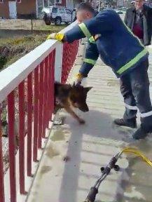 Köprüde Sıkışan Köpeğe Kurtarma Operasyonu