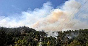 Mısır İçin Yakınlan Ateş Ormanı Sardı