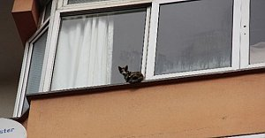 Bartın'da Kedi Kurtarma Operasyonu