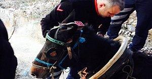 Su Kanalına Düşen Atı İtfaiye Ekipleri Kurtardı