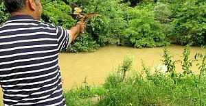 Yaralı Küçük Balaban Doğaya Salındı