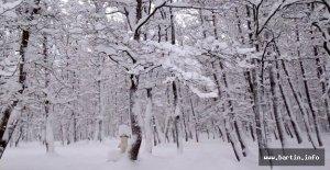 Meteoroloji#039;den yoğun kar yağışı...