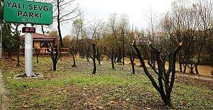 Bartın'da Ağaçlar Budanıyor