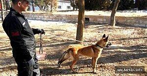 Bartın'da Bomba Arama Köpekleri Görevde