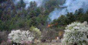 3 dönümlük kızılçam ormanı yandı