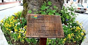 3 Asırlık Anıt Ağaçlara Tanıtım Tabelası