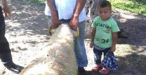 Traktörde babasının kucağından düşen 4 yaşındaki Emir öldü