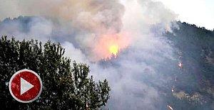 20 hektar kızılçam ormanı yandı