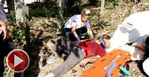 Ceviz topladığı ağaçtan düşüp yaralandı